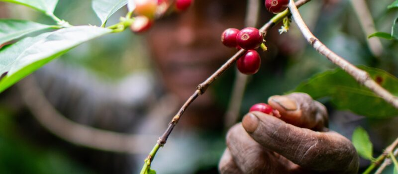 A Trip To Coffee Country: Visit Letefoho and Explore Authentic Local Coffee Culture… from bean to cup