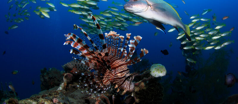 Traditional Laws Protect the World's Most Biodiverse Reef