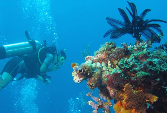 Underwater diver and coral