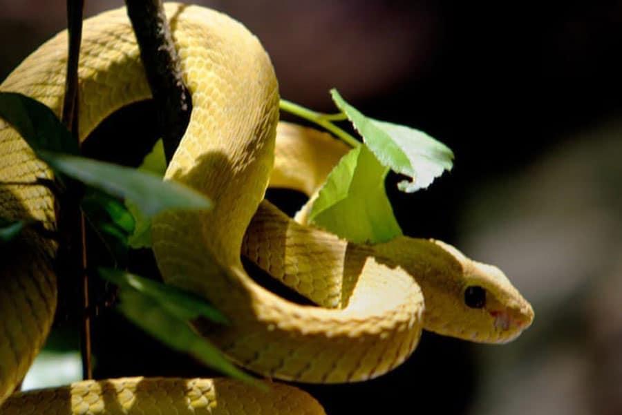 Timor-Leste: Animal, Reptile, Snake, Green Snake, Bird