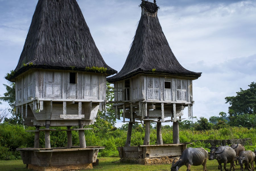 Timor-Leste: Furniture, Bench, Outdoors, Mammal, Horse, Animal, Nature, Building, Cow, Cattle, Countryside, House, Housing, Cottage, Roof, Rural, Spire, Steeple, Architecture, Tower, Shelter, Sheep